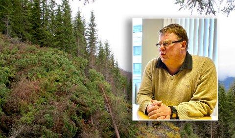 Planting av skog er et billig virkemiddel for å binde opp CO2, mener kommunedirektør Hugo Thode Hansen.