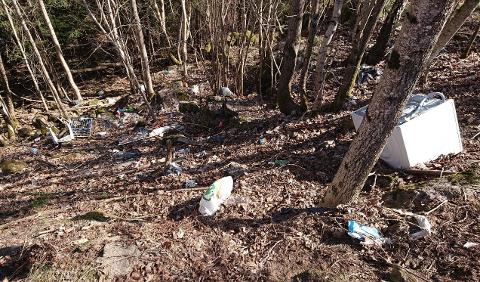 VILLFYLLING: Slik så det ut bak rasteplassen på Kleppan langs Hvittingfossveien litt tidligere i vår. Stadig flere reagerer på at det kastes søppel i naturen rundt om i Holmestrand kommune.