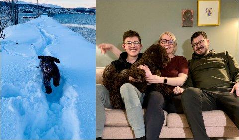 ARKTISK VANNHUND: Den spanske vannhunden Ella fikk seg et kaldt møte med iskaldt hav i Tromsø torsdag. I kveld får hun kos hjemme i Tromsdalen av resten av familien. Fra venstre:  Leonard, Sarah og Lasse Yttermo Reibo