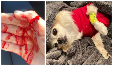 SKADET: Det gikk hardt ut over både hund og hånd da Cita og Tina ble angrepet av rottweileren.