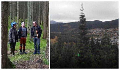 NOREGS HØGSTE: – Med 51,1 meter er denne kjempeedelgrana i Kaupanger det høgste treet som er mælt offisielt i Noreg, seier Frode Hjorth (t.h.), her saman med Ragnar Johnskås og Gwidon Tyczynski (t.v.).