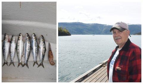 FANGST: Olav Giskeødegaard fekk denne fangsten i sildegarnet sitt i Kvamsøy.