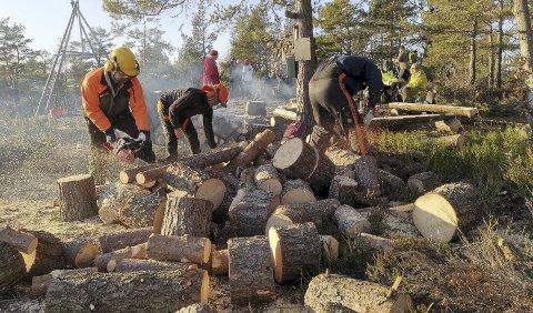 Dugnadsinnsats: Rundt 50 personer stilte opp med motorsager klare for innsats lørdag. Det ble lagt ned et stort arbeid med felling av trær som har sperret for den flotte utsikten på toppen av Fagerhei. Foto: Frode Gustavsen.