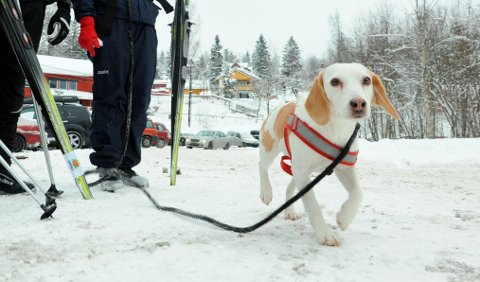 PÅTURIMARKA:Hund i bånd i helga; et must i Nittedal, ikke så farlig i Oslo.