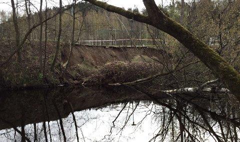 STORT RAS: Jordraset måler ca. 100 meter og ifølge Budstikkas reporter er det 10 - 15 trær som har havnet i elva som følge av raset.
