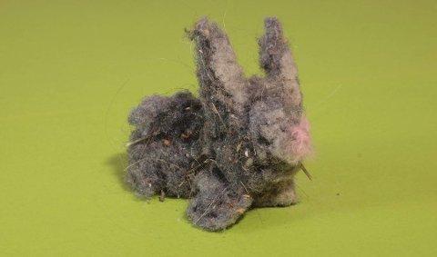 En støvdott kan fortelle deg om du har for mye støv eller muggsopp i huset. Foto: Mycoteam/ANB