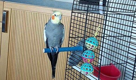SAVNET: Polly forvant hjemmefra torsdag forrige uke.