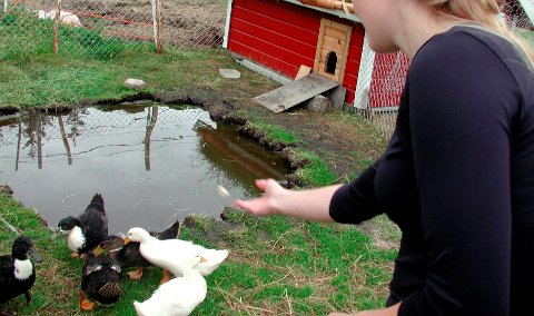 Dyrevelferd: Når ungene kommer til Vågan så får de mater endene ved Sandsletta Camping, og oppleve de andre dyrene på gården, samt teste badestampen.