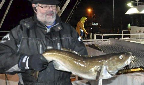 LITE TORSK: -i har tatt i mot så lite torsk i år har jeg har ikke fått meg ferskfisk, lever og rogn, sier Bjørn Arne Bendiksen. Dette bildet er fra i januar i fjor. Foto: Kai Nikolaisen