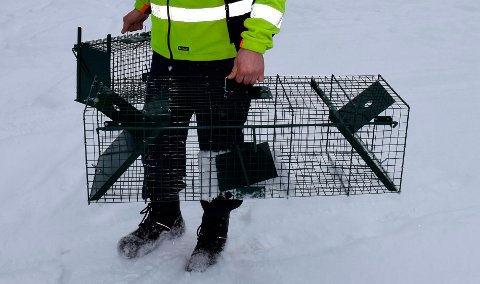 Dette er fangstburene som ved hjelp av åte er benyttet i den kommunale kattefangsten i Søndre Land.