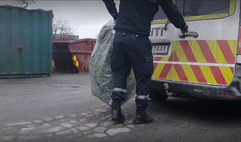 BESLAG: Store mengder grønne planter ble beslaglagt av politiet i Gjøvik torsdag. Nå er to personer siktet og varetektsfengslet.