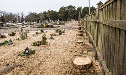 22 TRÆR: Det er langs gjerdet mot sykkelstien og Tjøllingveien trærne er blitt hogd ned.