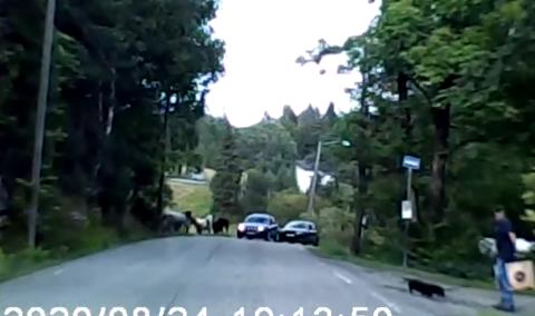 REAGERER: Denne kjøringen som ble fanget på video skaper sterke reaksjoner.