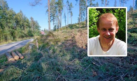 TØMMERHOGST:Fra hogstfeltet mellom Stamveien og Ørretveien på Holum skog, med Vidar Myhre fra Miljøpartiet innfelt.
