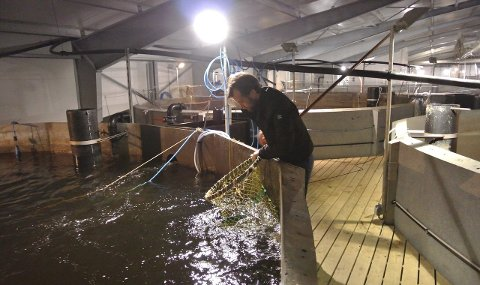 STORE VISJONER: Her går laksen i anlegget til Langsand Laks på Jylland i Danmark.   Nå ser det også ut til å være duket for et oppdrettseventyr på det gamle industriområdet til Denofa på Øra. (Arkivfoto: Øivind Lågbu)