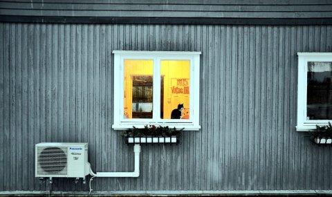 MÅ SØKE BRUKSENDRING: En katt som sitter i vinduet i Dyrebeskyttelsens hjelpesenter på Rolvsøy. Nå har kommunen konkludert med at bruken er i strid med godkjenningen for eiendommen og bedt Dyrebeskyttelsen søke om bruksendring.