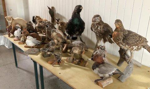 Utstoppa dyr på auksjon: Disse skal under hammeren i Låvegalleriet lørdag.