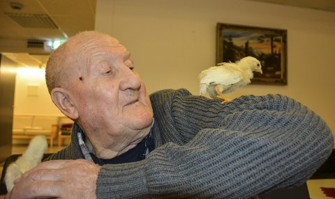 GLAD: Olaf Bjørnstad har blitt glad i kyllingene Hans og Grete, som kvikker opp hverdagen for de eldre ved Aurskog sykehjem. Olaf sier det sånn: – Det er en hana og ei høne. Je sitter i stol´n nemme dom. Ja, je lever med dom!