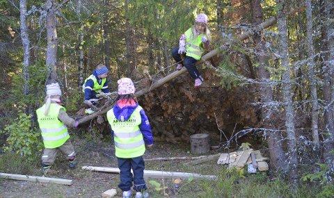 Ut i luften, opp i trærne: Skogen brukes flittig av Akebakken, de eldste er gjerne på leirplassen tre ganger hver uke. Her har Kaisa (6) klatrer på toppen, mens Tobias (4) er nederst på taket. Amanda (5) og Ella (6) følger med på bakken. Bilde: Privat