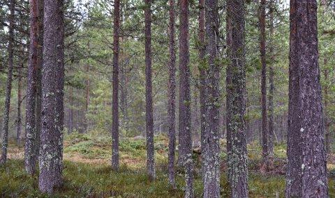 STOR INTERESSE: Nok en skogeiendom er til salgs i Elverum. Illustrasjonsfoto: Nils Henning Vespestad