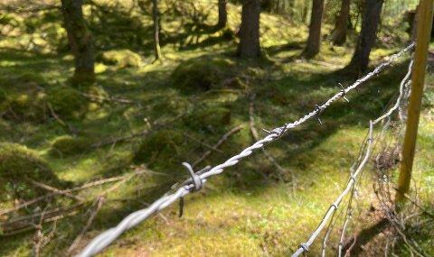 GJERDE: Dette piggtrådgjerdet kan ein finna like ved turstien til Ådnahove i Nordmarka.