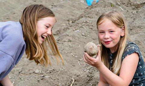 FRA JORDA: Femteklassingene Mathilde (t.v.) og Asta fra Åsgård skole har funnet en stor settepotet med flere groer og gjør seg klar til å få satt den i jorda, samtidig som de sier: «Ta en potet».