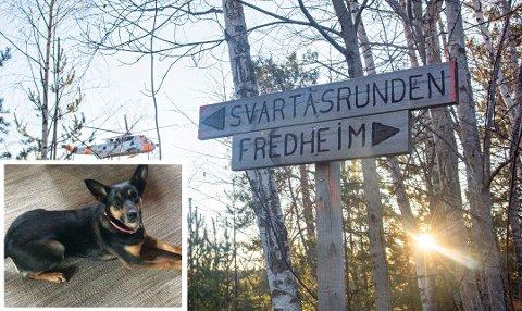 PÅ BEDRINGENS VEI: Den savnede mannen som ble funnet torsdag ettermiddag skal være på bedringens vei. Han fikk varme av hunden han var på tur med.