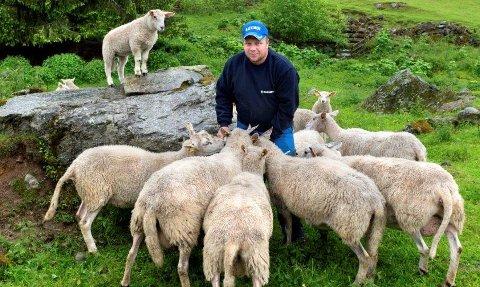 Ronny Nygård venter med å slippe sauene på beite på grunn av ulv.