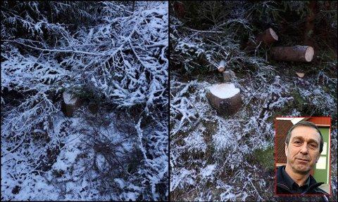 FJERNET: Jørn Johnsen og familien oppdaget tilfeldig stubbene tett på veikanten. Han forsto raskt at det ikke kunne være snakk om hugst for privat juletre-bruk, på grunn av størrelsen.