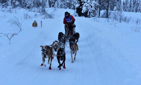 Hege Ingebrigtsen og hundene gikk inn til sterk andreplass på Hamar.