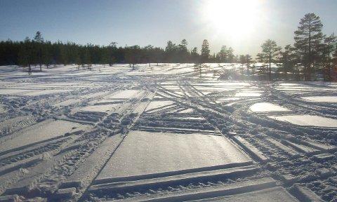 VIllmannskjøring: Slik ser det ut i de svenske skogene nær grensen til Åsnes. Snøskutersporene går på kryss og tvers over alt og bærer preg av villmannskjøring.