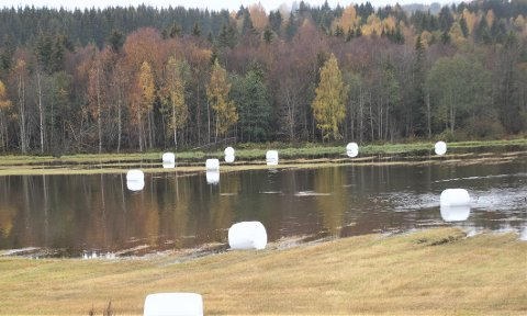 VÅTT FÔR: Rundballer og ender i skjønn forening ved kommunegrensa mellom Lunner og Gran.