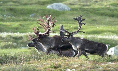 Jakt: Ove Lynghamar seier dei 27 jegerane ikkje føler seg høyrde. illustrasjonsfoto: Olav Strand