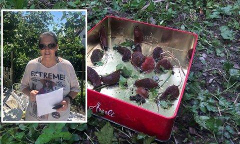 LEI: Anita Lillesveen plukker snegler i hagen hver eneste dag.