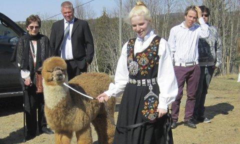 DRØMMEGAVE: Malin Skjølås fikk det hun aller mest ønsket seg i konfirmasjonsgave, alpakkaen Spot. Foto: Privat