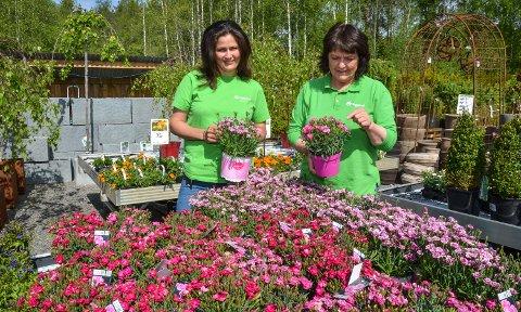 SER MOT SENTRUM: Mari Kramprud Arnesen (til høyre) har drevet hagesenter i Heradsbygd i over 40 år. Sammen med datteren Kassi Kramprud Arnesen har hun bestemt seg for å flytte.