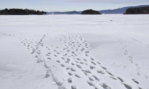 Vær forsiktig: – Ta med ispigger så du kan komme deg opp om du går igjennom isen, sier tidligere leder i Steinsfjorden Fiskeforening, Kjell Sundøen.