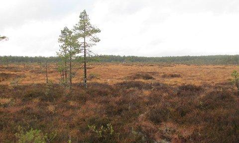 KAN BLI BRENT: Større områder i Aurskog-Høland kan bli vernet med naturvernbrenning. Dette bildet fra Store Rekke naturreservat viser myrområdene i tilbudt areal.