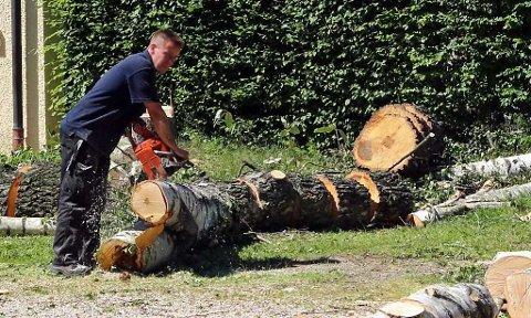 Naboen som på Sørlandet felte trær ulovlig på naboens grunn måtte ut med 400.000 kroner i erstatning. Årsaken var at han måtte betale for å gjenplante noen av trærne i nesten full størrelse (illustrasjonsfoto). Foto: Pixabay