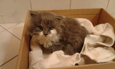 Katt reddet  i august 2015.