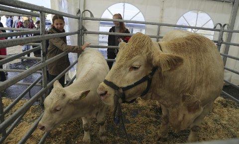 Det vert utstilling av både små og store dyr under landbruksdagane, lovar arrangørane.