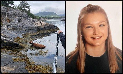 Maria Træland Hauge (18) frå Lindås var ein av fire ungdommar som redda ei ku.