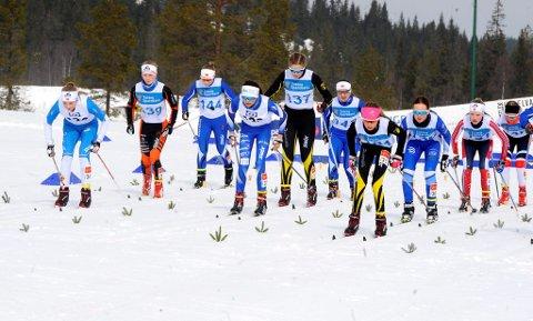 Fnalen i GD- og Toten Bank-cup ble avviklet på Lygna. Bildet er hentet fra starten i  J14 år. Tallene fra GD-cupen de siste årene viser en markant nedgang i antall løpere som deltar.