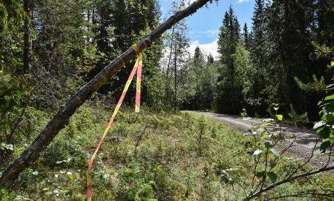 STORT SKOGOMRÅDE: Båndet som markerer eiendommens grense ved Agnåsvegen.