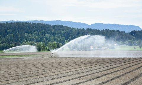 STABILITET: - Landbruket er en biologisk næring som drives i et svært langsiktig perspektiv, og trenger langsiktige og stabile rammebetingelser, sier forfatterne av dette innlegget.