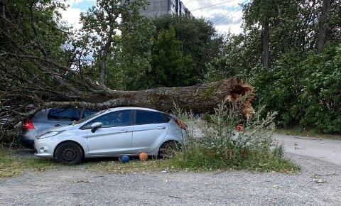 STERK VIND: Onsdag ble fem biler vraket av et tre som ble felt av vinden.