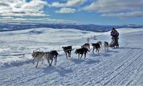 Hege Ingebrigtsen er en av to utøvere fra Narvik som stiller i NM i hundekjøring.