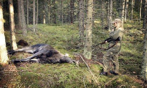 DET ER TIDA: Elgjakta har startet for noen, mens ganske mange andre jaktlag i distriktet holder seg til den gamle, klassiske datoen 5. oktober.