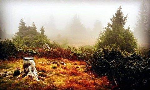 1. HØST PÅ FJELLET: Vind og tåke skapte magisk stemning. Foto: Rigmor Pauline