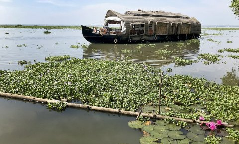 Med bambusbåt i Back Waters: Sakte glir en Kettuvallam gjennom hyacint, lotus og vannliljer. En fantastisk reise helt sør i India. Perfekt for opplevelser og avslapning. Foto: Pål Nordby